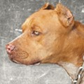 Mauled to Death by a Pit Bull, Adonis Reddick Was Still Nobody's Victim