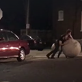 Viral Video Shows Men Playing With, Removing One of St. Louis' Huge Balls