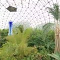 VIDEO: Drone Footage of the Climatron at the Missouri Botanical Garden