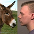 Collinsville Jackass Charged with Punching a Donkey in the Face
