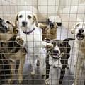 Missouri Dog Breeder Loses Defamation Suit Against Humane Society