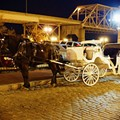 St. Louis Officials Call for Regulation of Horse-Drawn Carriages