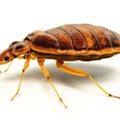 On Top of Every Other Damn Thing, Now St. Louis Has Bed Bugs