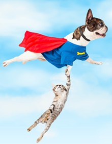 37360200_flying_dog.jpg