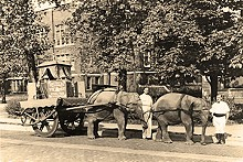 COURTESY ANHEUSER-BUSCH - The Clydesdales looked different back then.