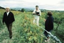 In vino veritas: Jonathan Nossiter (center) explores - the world of wine.