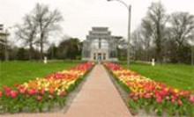 Now it's spring; the Jewel Box Tulip Festival - (see Sunday) is a sure sign.