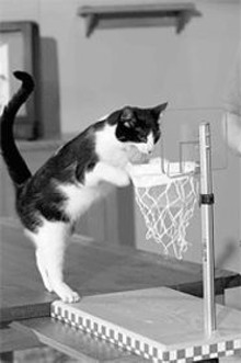 Sure, he can dunk, but that cat's weak on defense.