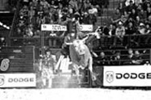 How manly are bull riders? This guy's wavin' at the - camera even as he's hangin' on for dear life.