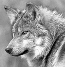 WILD CANID CENTER - Kids, meet wolves; wolves, meet kids at Lone Elk Park Sunday, July 6.