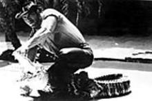 Kachunga the Alligator Wrestler performs dental exams at Six Flags starting Monday.