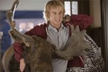 MELISSA MOSELEY / UNIVERSAL PICTURES - You, me and a random moose: Owen Wilson plays a - stoner-doofus. Again.