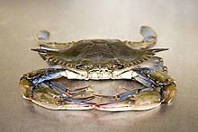 JENNIFER SILVERBERG - Crab is front and center in several of McCormick & Schmick's dishes.