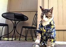 c5291915_catfestival-featurepic3.jpg