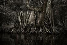 2aee9be8_savannah-swamp-2.jpg