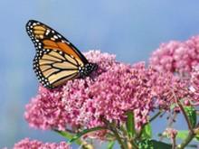 1f3bdaff_pollinator.jpg