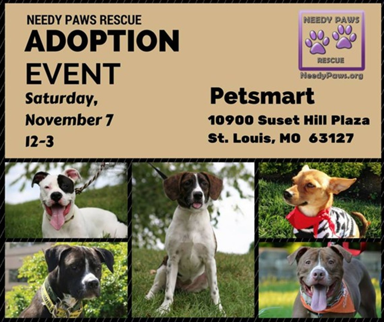 Dog Adoption Events In St Louis