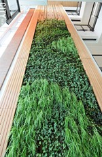 A green wall in the Golisano Institute for Sustainability building improves the facility's indoor air quality. - PHOTO BY JEREMY MOULE