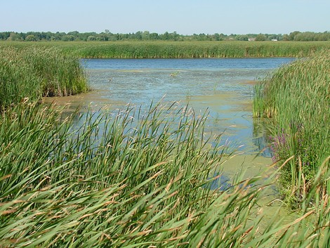 A view of Braddock Bay and its wetlands. - PHOTO COURTESY U.S. ARMY CORPS OF ENGINEERS