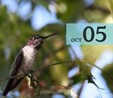 8619e45d_birding.jpg