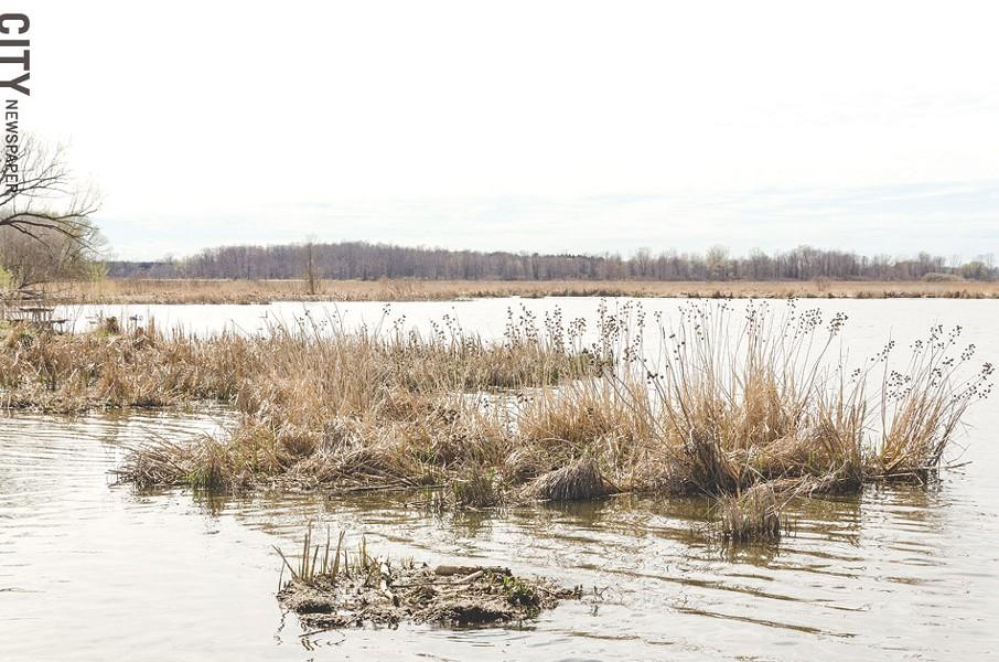 Coastal wetlands in Braddock Bay. - PHOTO BY MARK CHAMBERLIN