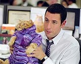 "COLUMBIA PICTURES - Exploring - his feline side: Adam Sandler in ""Anger Management."""
