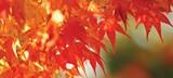 940970c7_leaves.jpg