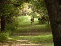 Hiking: Happy trails
