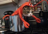 lobster_kitty_jpg-magnum.jpg