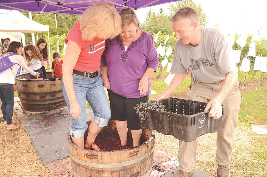 Stomp grapes at Casa Larga Vineyards' Purple Foot Festival. - PHOTO BY LARISSA COE
