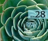 6641c583_succulent_grande.jpg