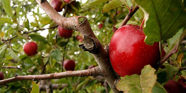 The Apple Farm in Victor has hiking trails that take you to Ganondadagan State Historic Site as well as Boughton Park.