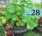 72c714e1_may_28-plantar_grande.jpg