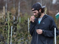 See ya later, bud. New CBD regs could crush small hemp farms