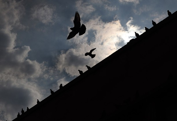 Pigeons wait for their lunch while perched atop a building on Division Street in downtown Rochester. - PHOTO BY MAX SCHULTE