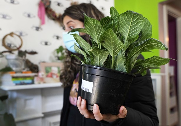 Christina Suralta carries a White Vein Fittonia as she shops for other plants at Stem. - PHOTO BY MAX SCHULTE