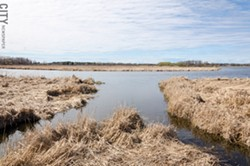 The US Army Corps of Engineers has developed a project to restore some of Braddock Bay's wetlands. - FILE PHOTO