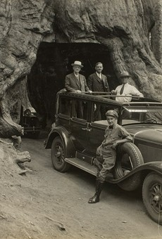 Audley D. Stewart's image of George Eastman and companions riding through Wawona Tree in Yosemite National Park in 1930.