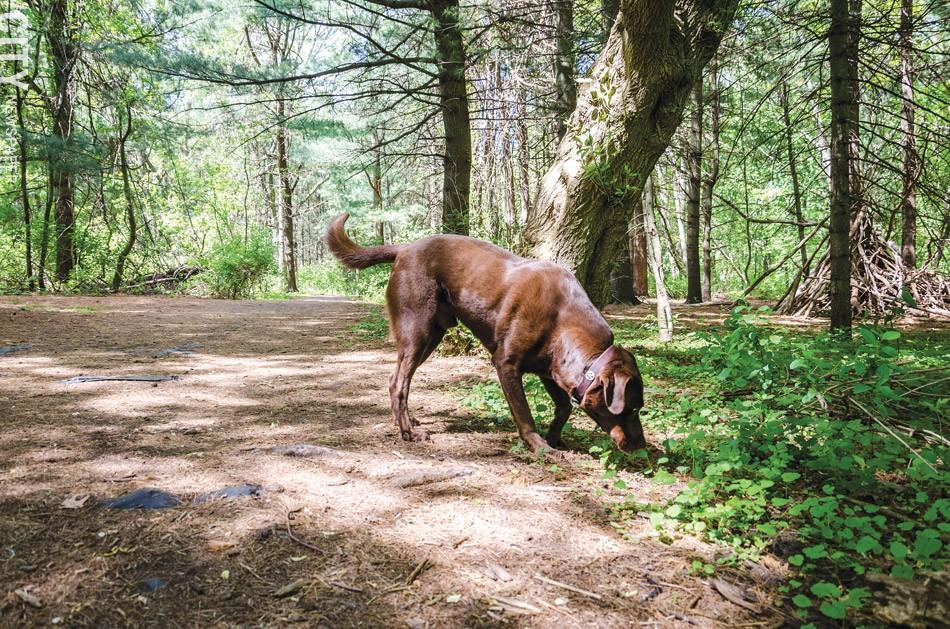 Dogs love Corbett's Glen. - PHOTO BY MARK CHAMBERLIN