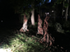 Nighttime view of sculptural installation by Jappie King Black on the grounds of 2 Loud Cows.