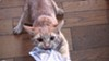"""One of the feline stars of """"Cat Video Fest 2019,"""" screening this weekend at the Little Theatre."""