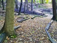 Helmer Nature Center turns former Christmas trees into quality trails