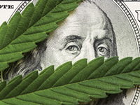 Legal cannabis could pay big for New York