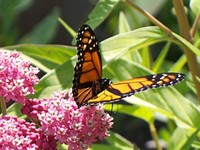 Zoo, state partner on butterfly conservation