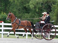 SPECIAL EVENT | Walnut Hill Carriage Driving Competition
