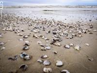 Shells spell distress