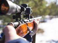 Collins takes shotgun approach to gun laws
