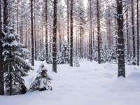 RECREATION | Winterfest