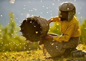 Film review: 'Honeyland'