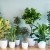 Houseplants You Can Grow @ Irondequoit Library